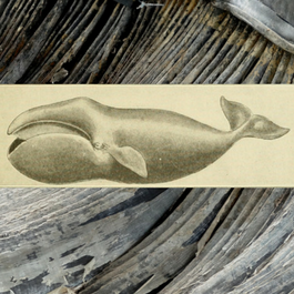 Monstrous Fishes and the Mead-Dark Sea: Whaling in the Medieval North Atlantic
